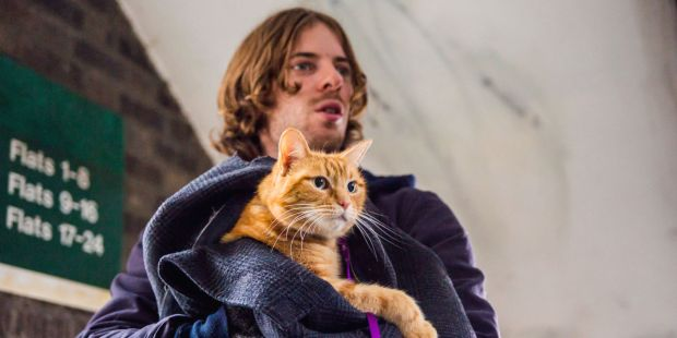 landscape-1472746745-a-street-cat-named-bob-luke-treadaway.jpg